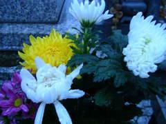 2009_1002_174134-SANY0002.JPG