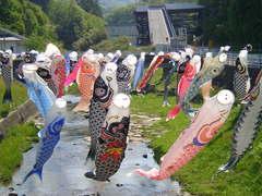 鯉のぼり�@.JPG