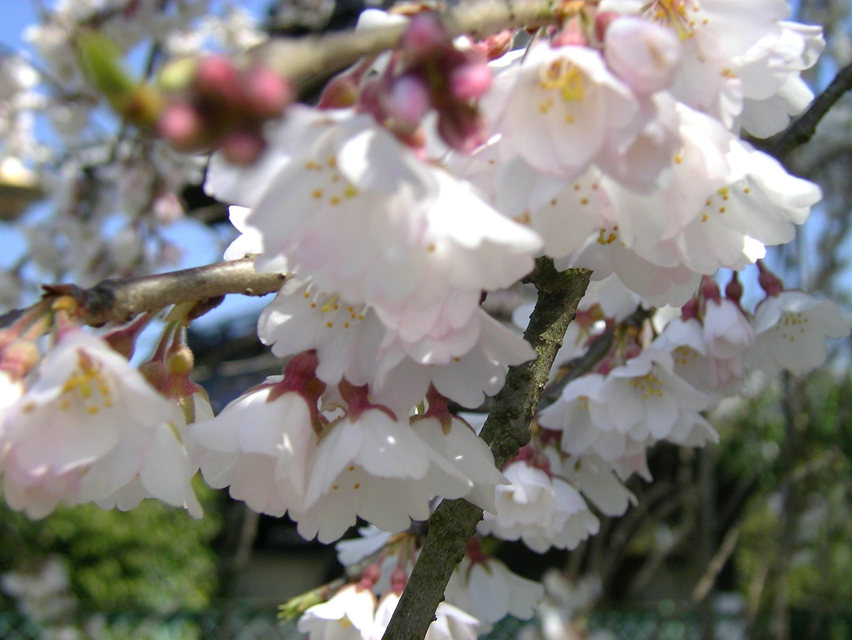 桜�@.JPG