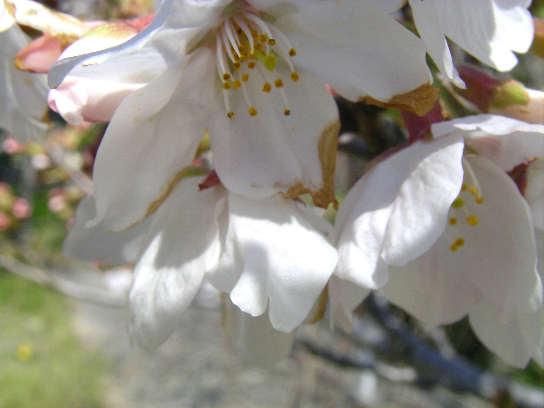 桜�B.JPG