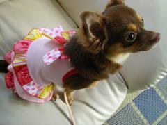 変な服を着せられたハナちゃん.JPG