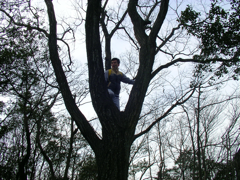 なぜか木に登る竹内先生.JPG