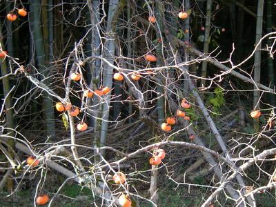 山柿.JPG