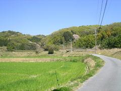 春の里山�@.JPG