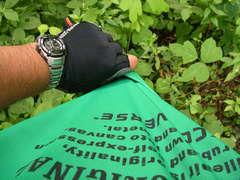 緑のTシャツ�@.JPG